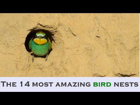The 14 most amazing bird nests - http://www.nopasc.org/the-14-most-amazing-bird-nests/