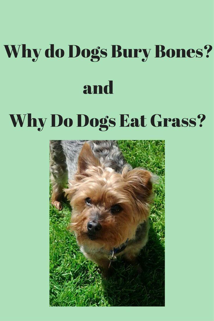 Just doggy stuff dog dog behaviourist and doggy stuff