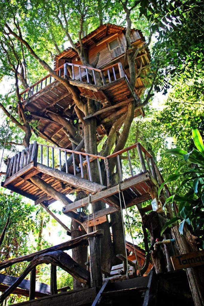 Rabeang Pasak Chiangmai Treehouse Resort | Tree house, Cool tree houses,  Tree house designs