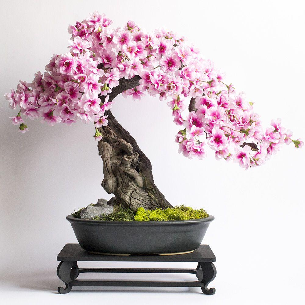 Bonsai Sakura Mini Bonsai Bonsai Indoor Plants