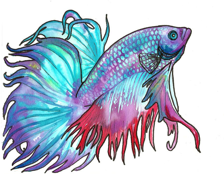 watercolor betta by jupiterjenny.deviantart.com