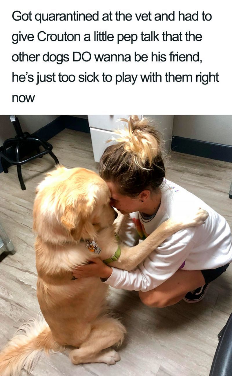 33 Cute Dog Posts That Will Have You Grinning All Day Cute Dogs Cute Little Animals Cute Baby Animals