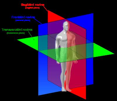 Anatomie roviny cz eng - Orientace na lidském těle – Wikipedie