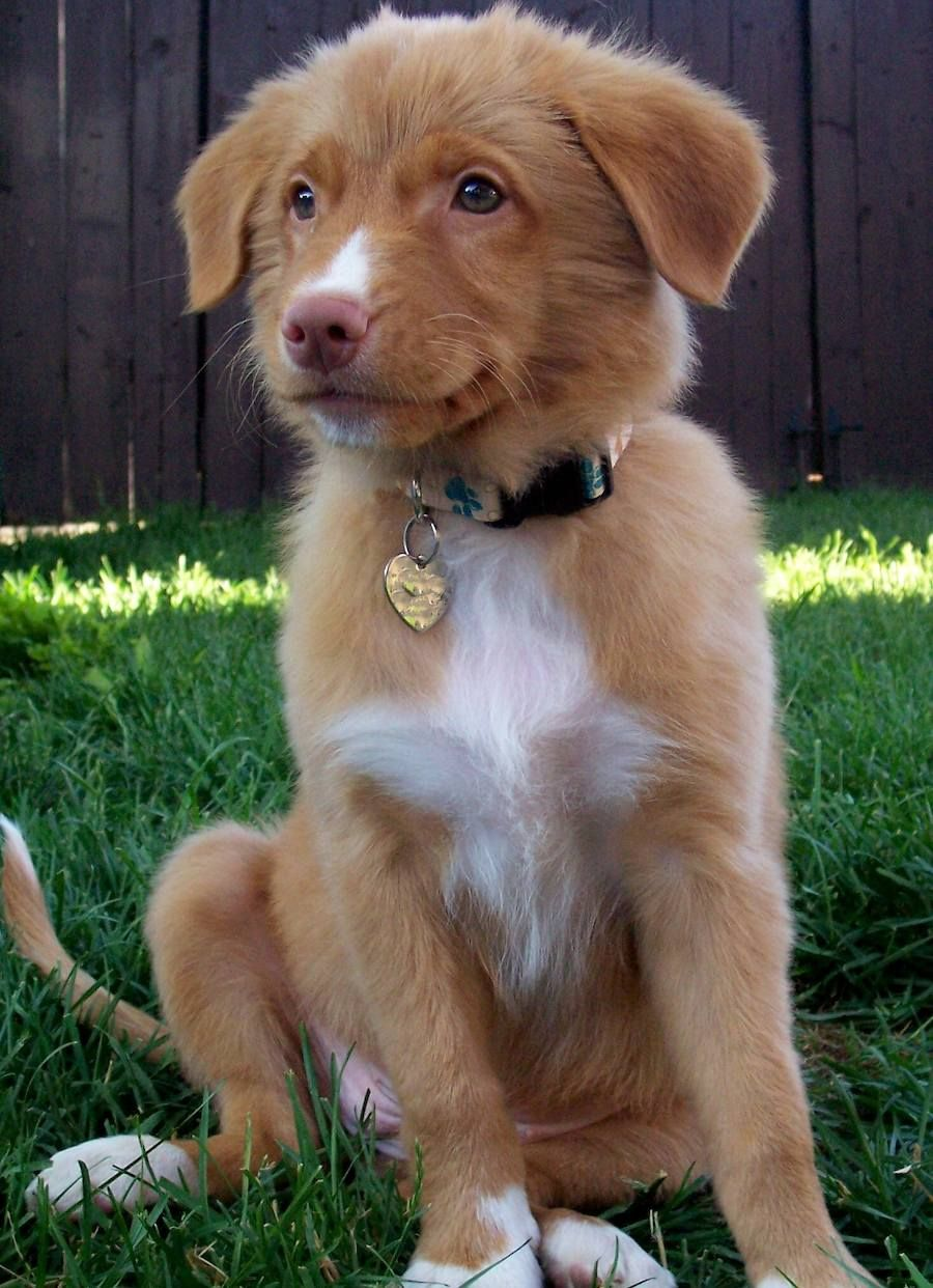 Pin By Sydney On Dogs Cute Dogs Retriever Puppy Cute Animals