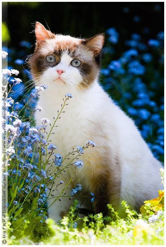 beautiful garden angel