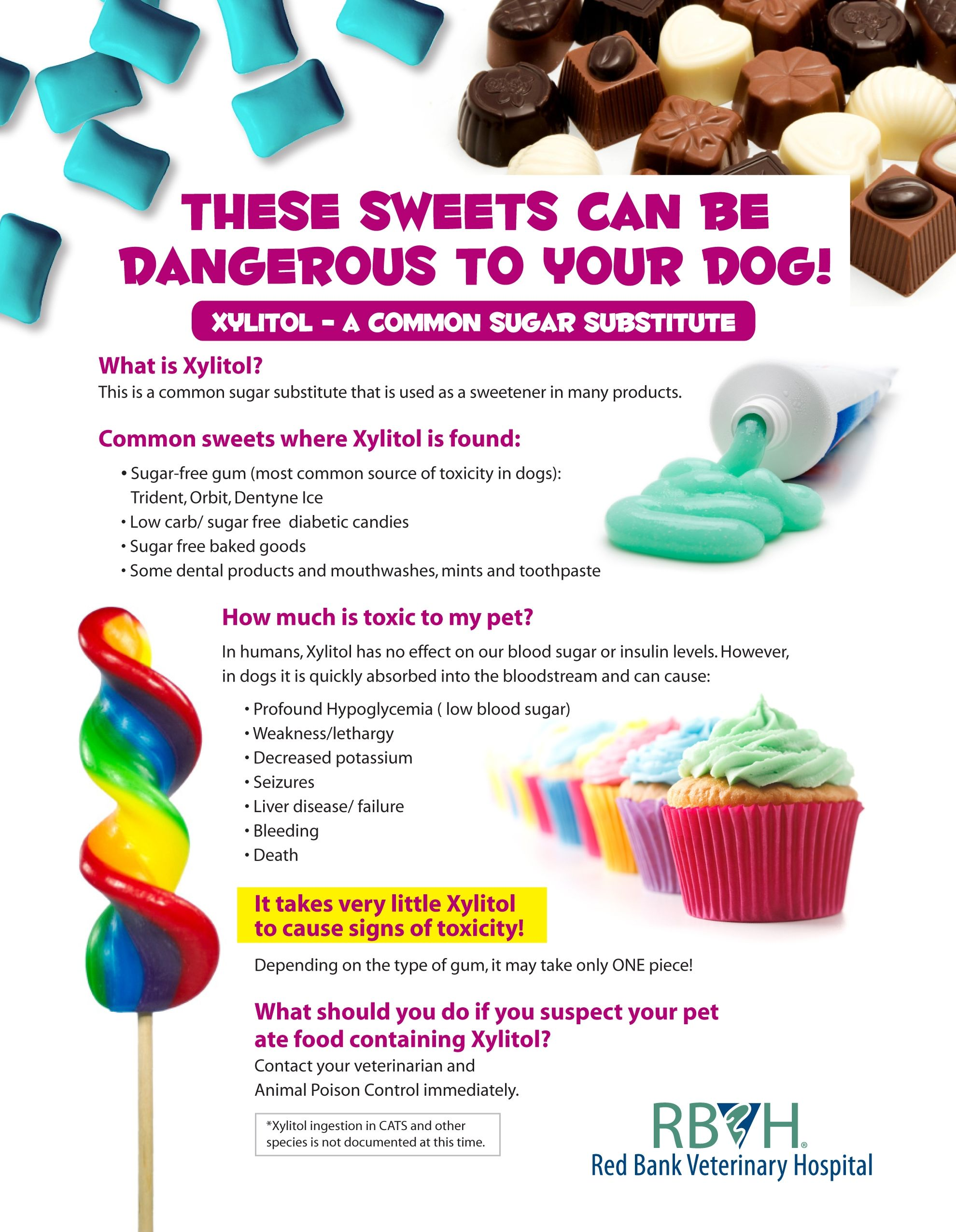 Xylitol Is An Artificial Sweetener That Must Be Kept Away From