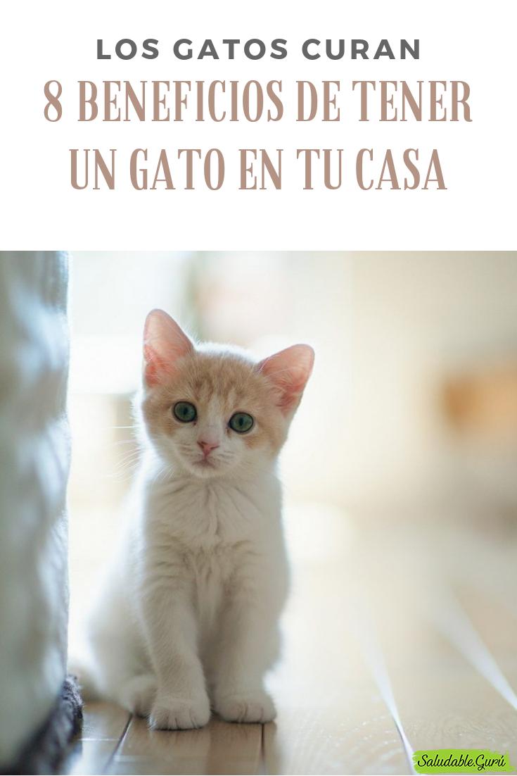 4ef51a70be3 Cosas que no sabías de los gatos!!!🐈   Gato   Gatos siameses bebes ...