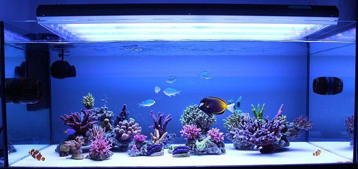 Pin On Fishroom
