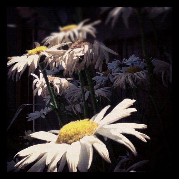 Flower 2 By Johanns Diaz