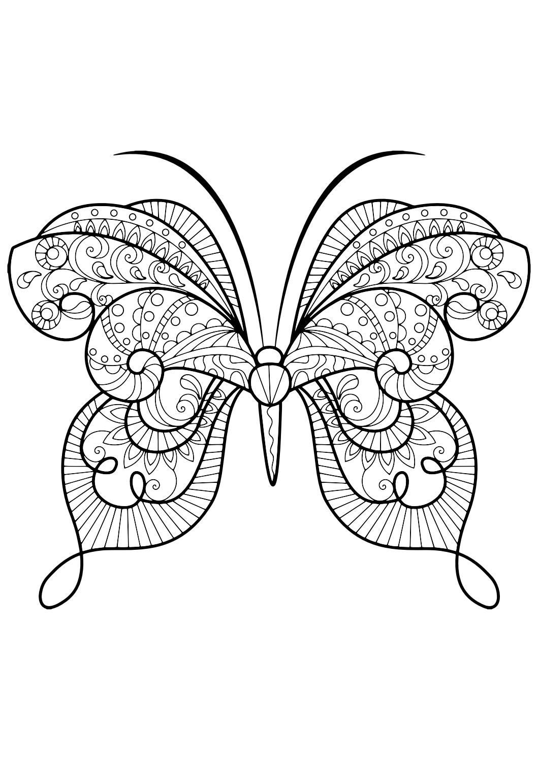 Luxury Butterfly Coloring Book 51 Adult Butterfly Coloring