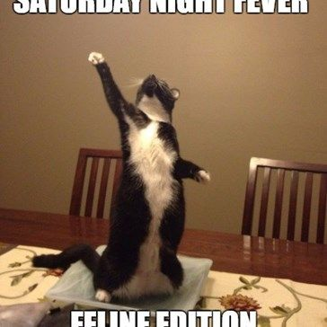 Saturday night fever feline edition.