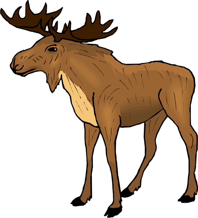 Moose Clipart Bull moose, Moose