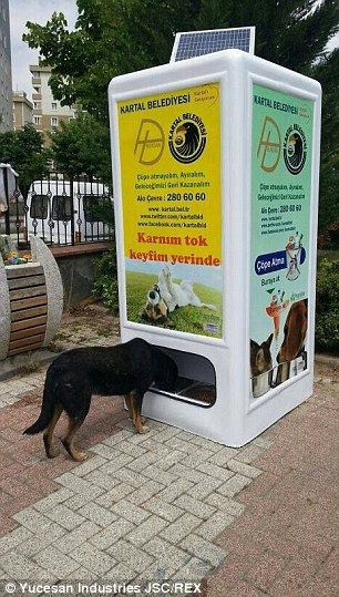 Meet The Vending Machine That Feeds Stray Dogs In Return For