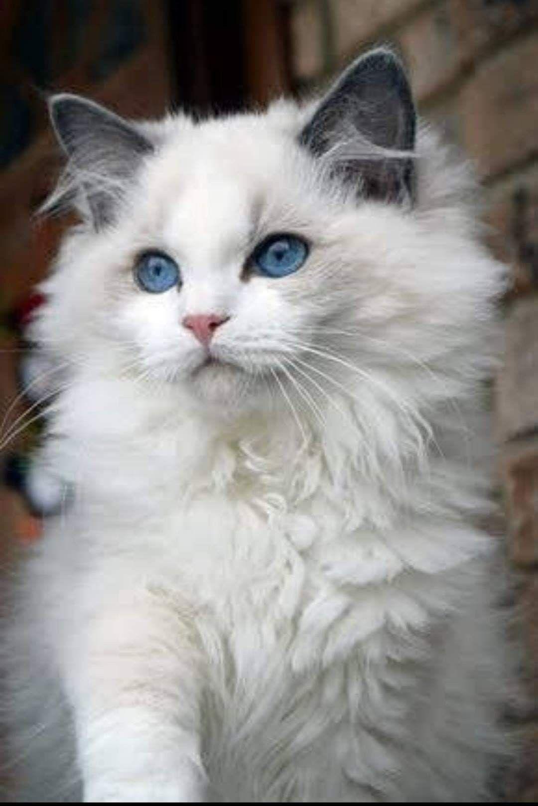 Pin By Victoria Tripplett On Precious Animals Pretty Cats