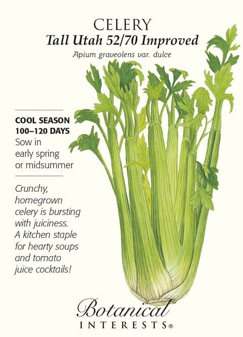 Certified Organic 2 grams Di Cicco Broccoli Seeds