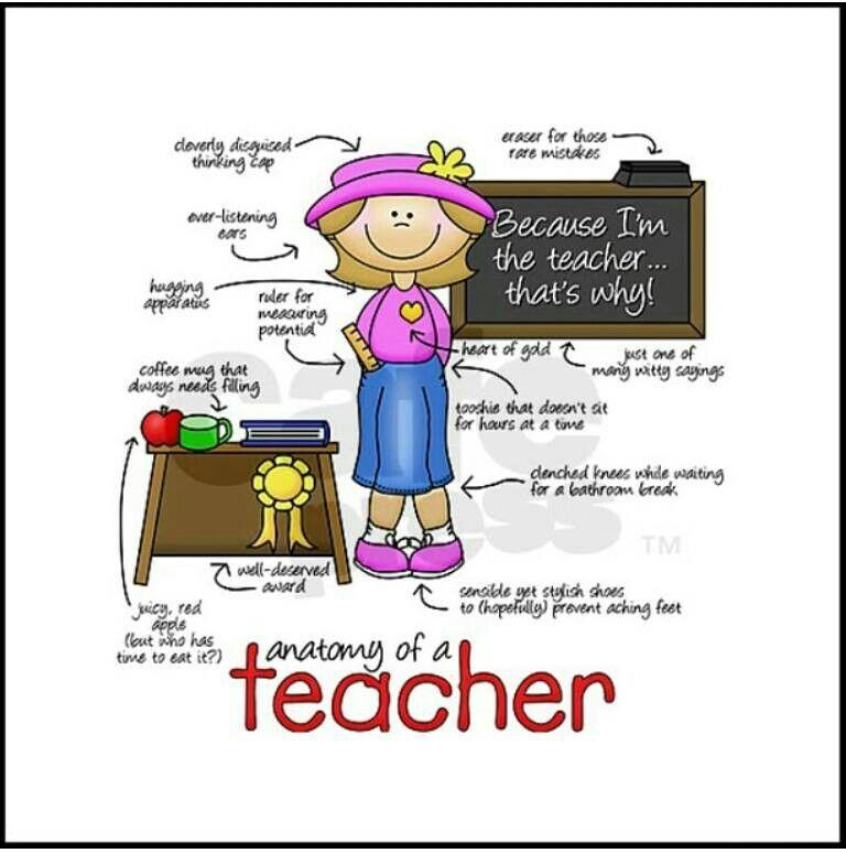 Anatomy of a Teacher   iTeach   Pinterest