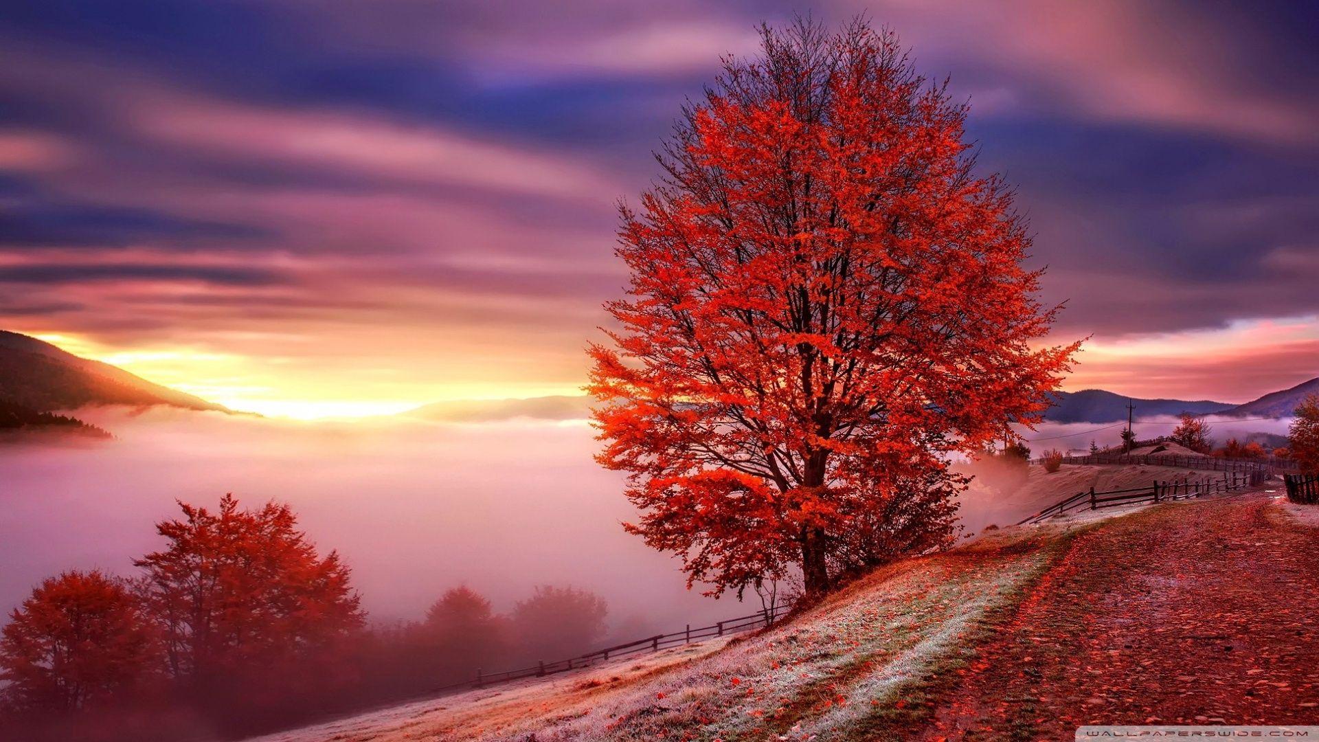 free desktop wallpaper autumn