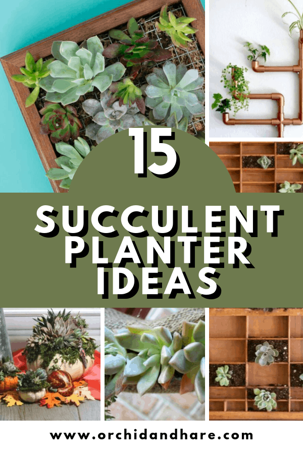 15 Unique Diy Succulent Planter Ideas For 2020 In 2020 Succulent Planter Diy Indoor Succulent Planter Verticle Garden