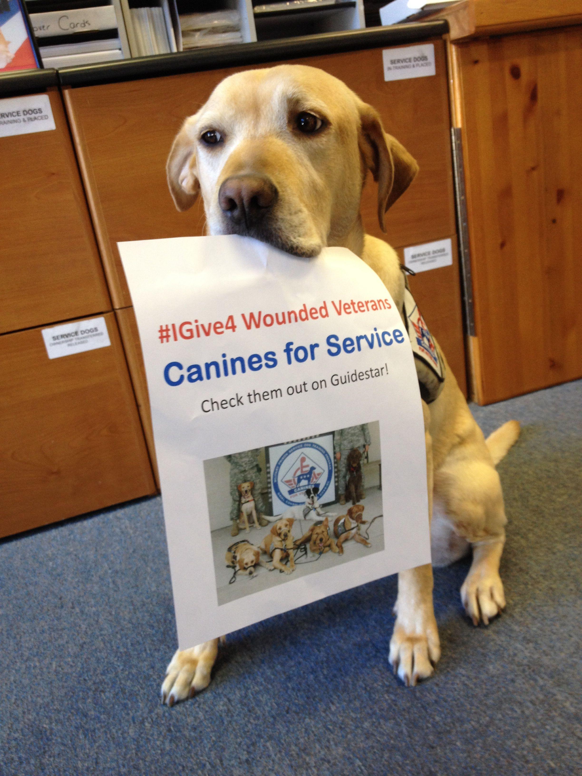 Igive4 veterans canine animals veteran