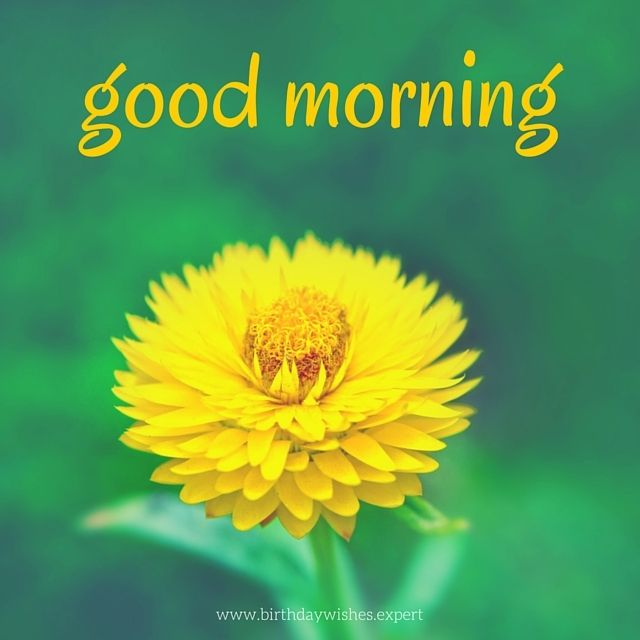 20 good morning images for a colorful day m by vipin radhakrishnan good morning images yellow flower mightylinksfo