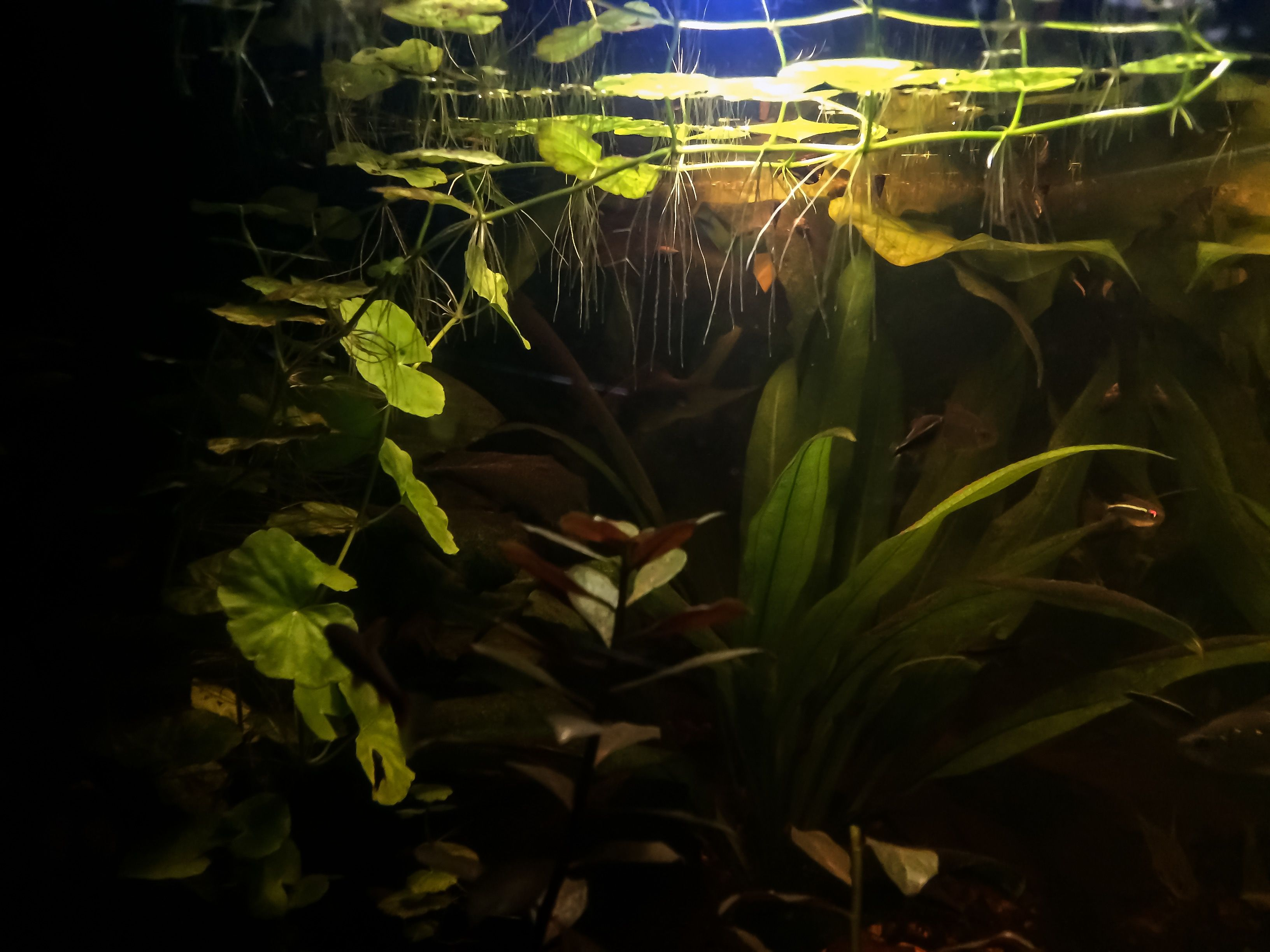 "Pin by doc mozz on ""Under Glass"" Aquariums Brackish Fresh Reef"