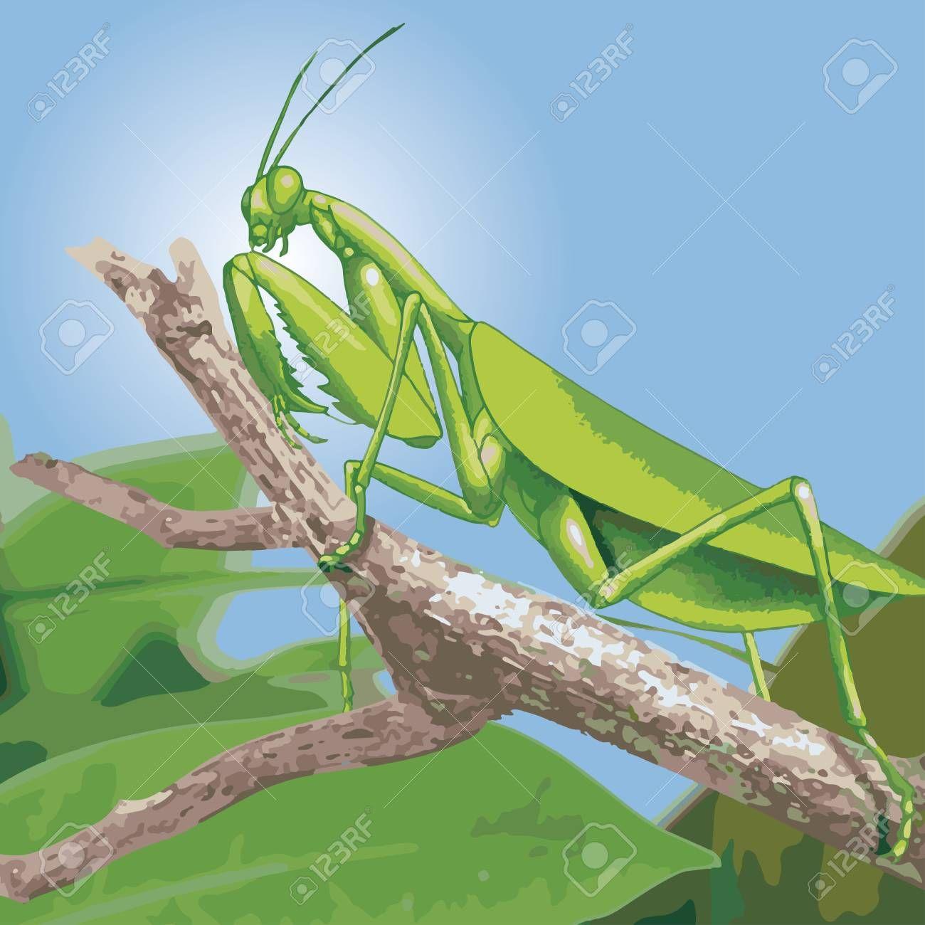 Green Praying Mantis Vector Illustration Spon Praying Green Mantis Illus Photography Magazine Template Ink Drawing Illustration Vector Illustration