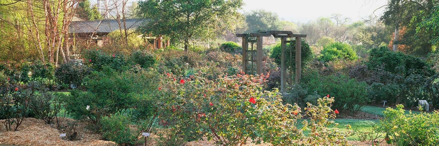 Descanso Gardens - Los Angeles Botanical Garden | LA TO DO | Pinterest