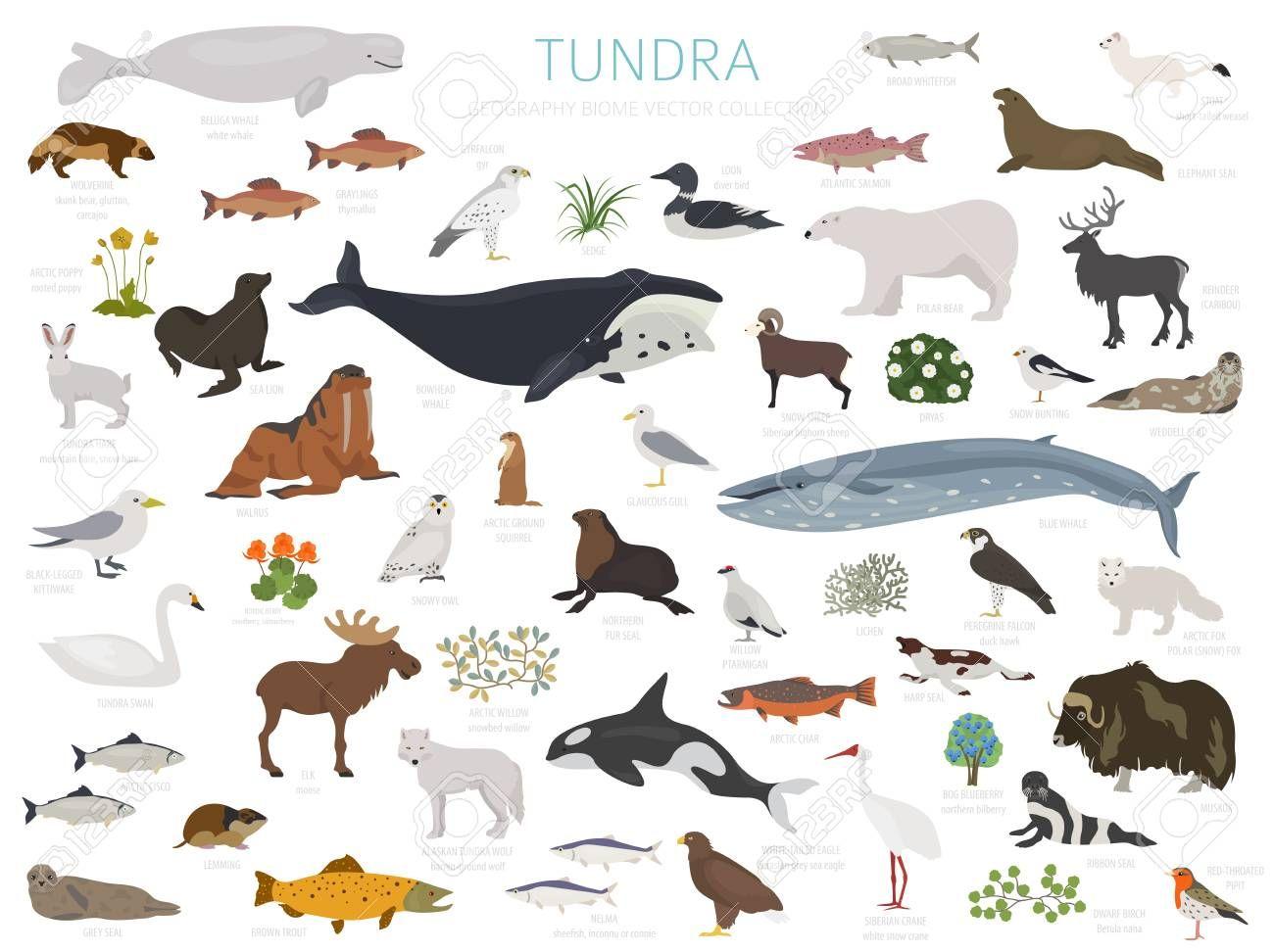 Tundra biome. Terrestrial ecosystem world map. Arctic