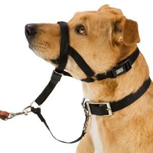 Holt Dog Training Head Collar I Love This Thing It Gently And
