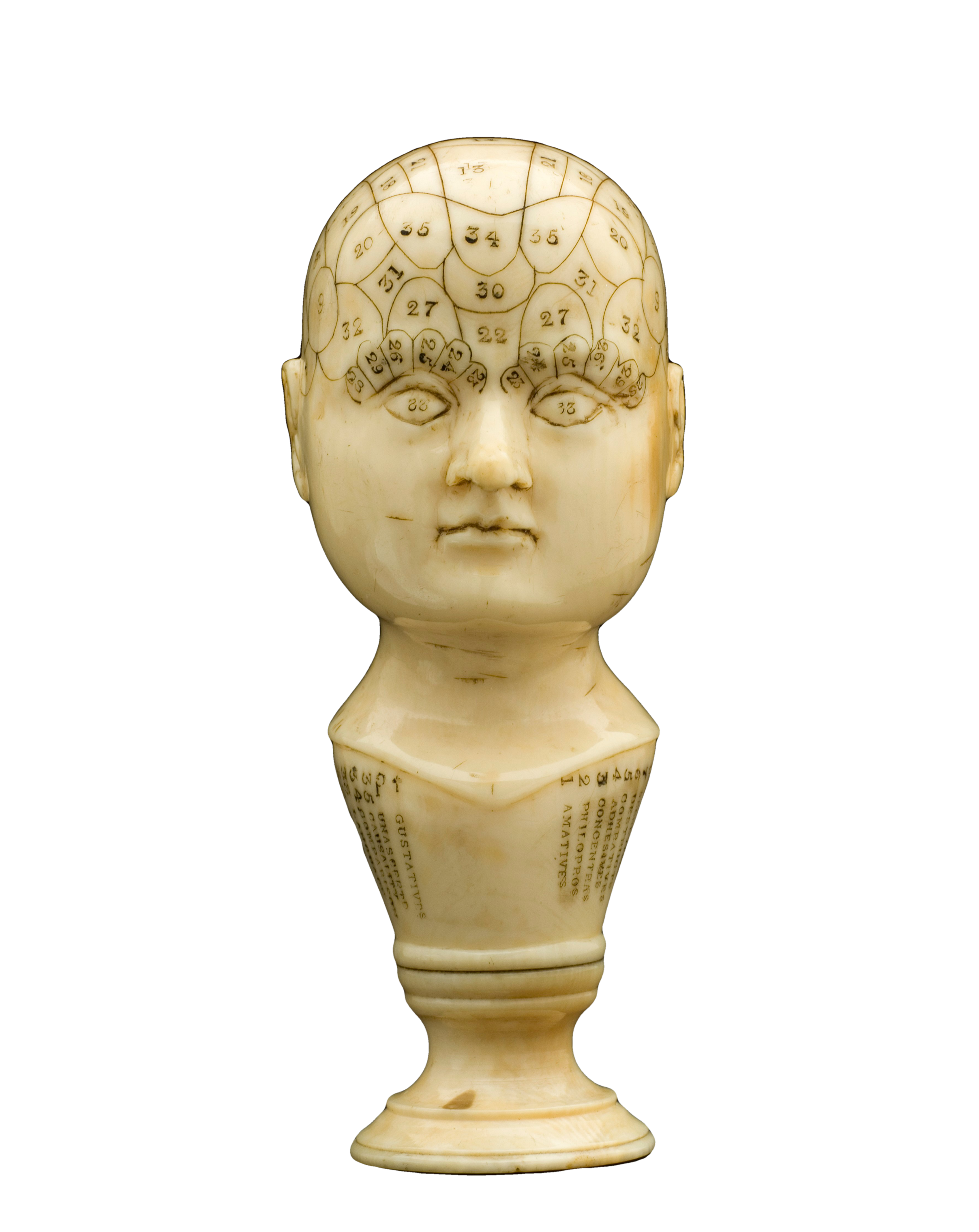 Pin By Vivian Weaver On Background Removed Png Phrenology Head Buddha Statue Vintage Images