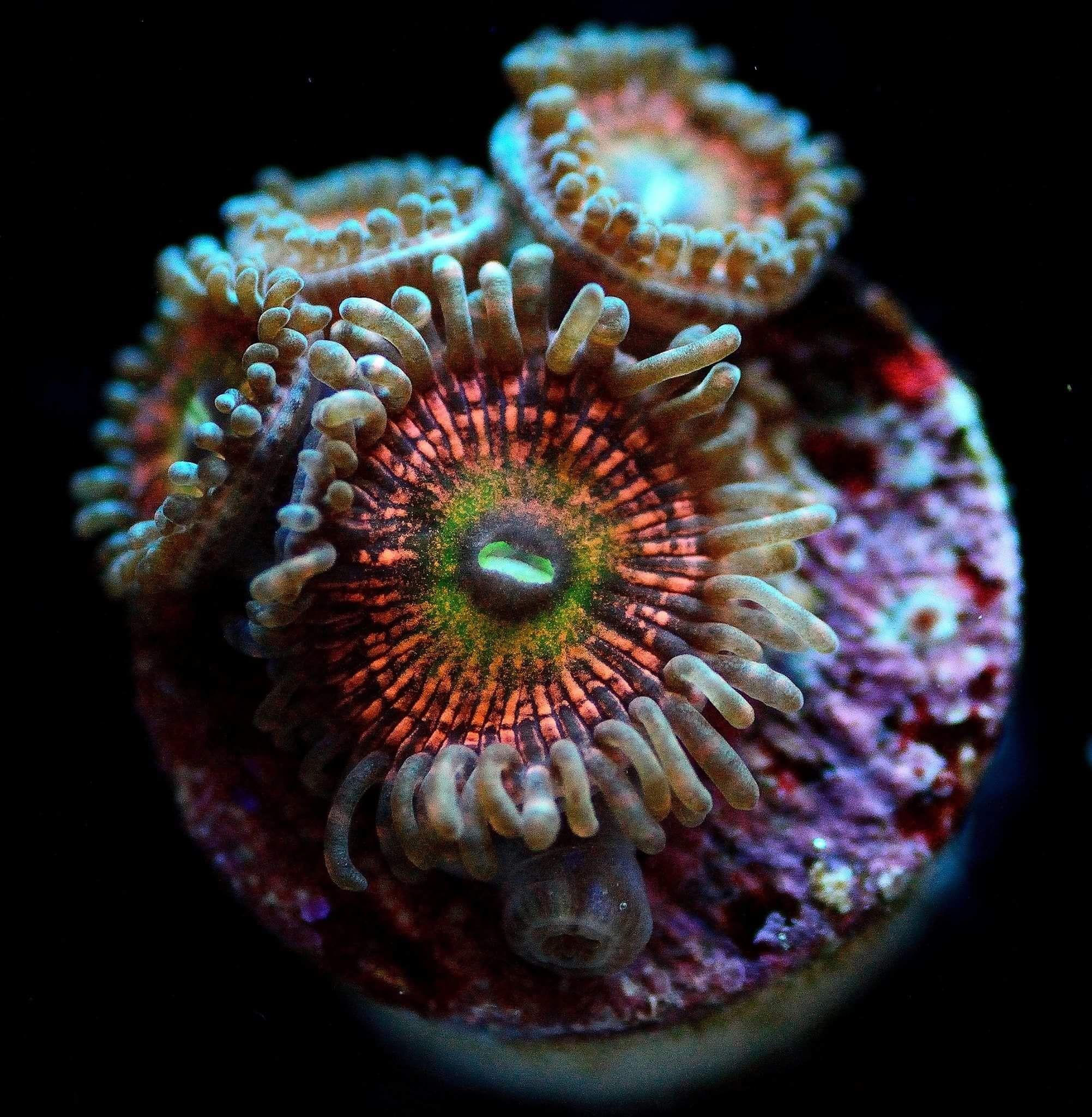 Pin By Reefcreators On Marine Animal