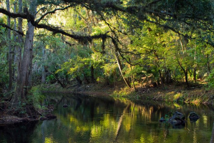 Hillsborough River State Park covers nearly 3,000 acres of wild Florida landscape and features over seven miles of scenic trails.
