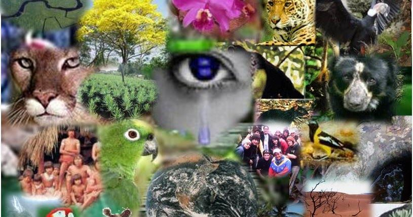 Resultados De La Busqueda De Imagenes Biodiversidad Peru Yahoo Search Pet O Instagram Posts Halloween Wreath