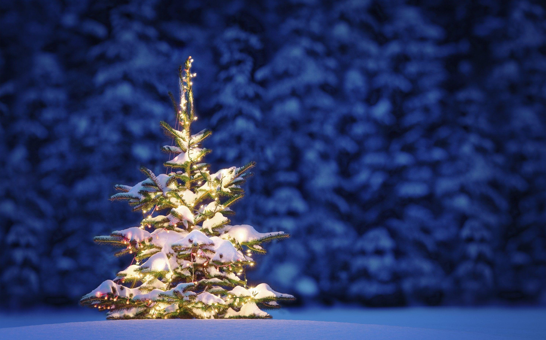 Christmas Night Winter Green Christmas Tree Covered With Snow Decor Snow Tree Lights Christmas Tree Wallpaper Snowy Christmas Tree Green Christmas Tree