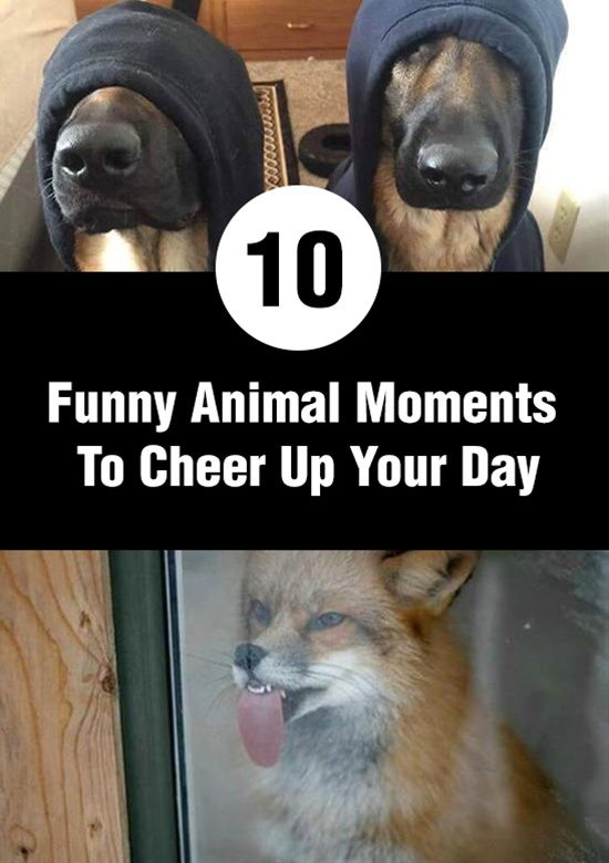 10 Funny Animal Moments To Cheer Up Your Day Love Cute Animal