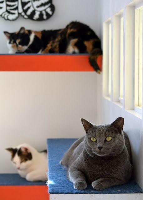 Adoptable kitties #adoptdontshop #cats