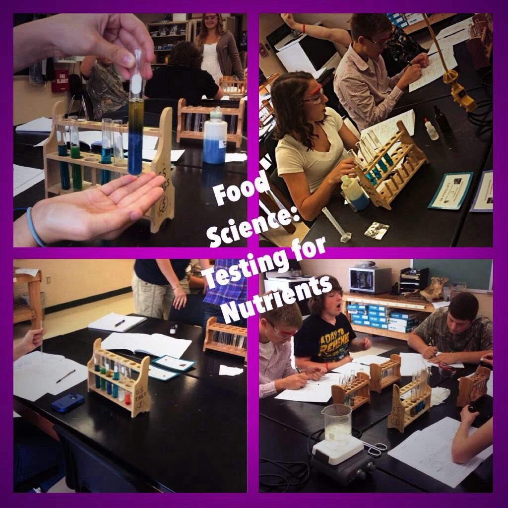 Testing For Nutrients Using Buriet And Benedict S Reagents