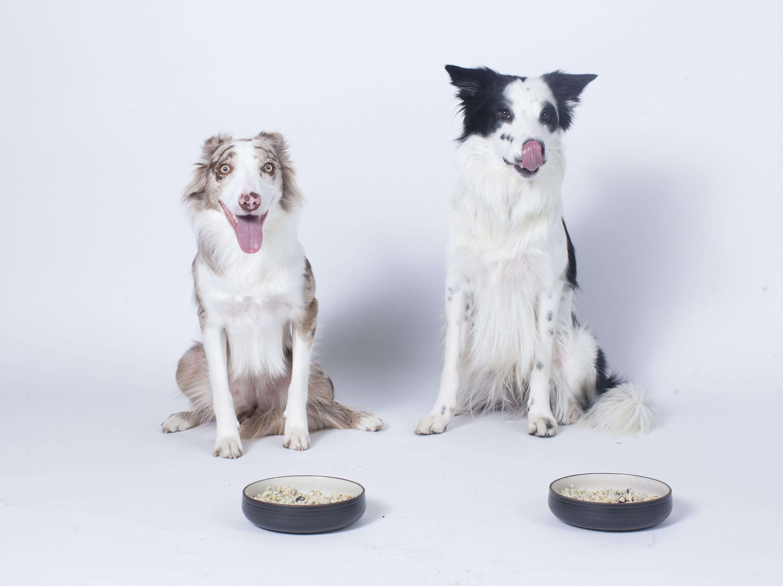 #doggychef #reinventingdogfood