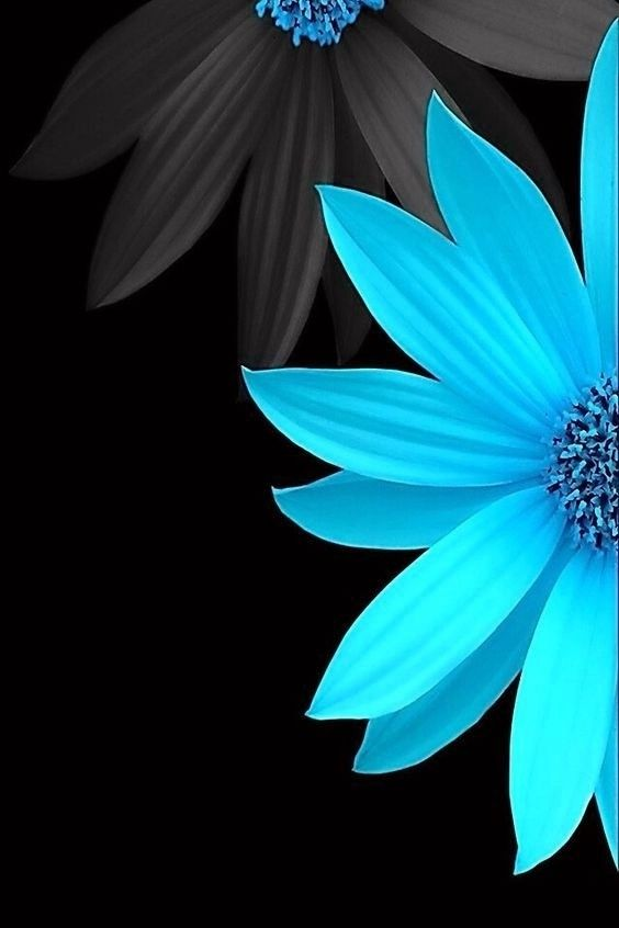 Lunapic Editimage Blue Flower Wallpaper Spring Flowers Wallpaper Flower Wallpaper Blue flower wallpaper dark