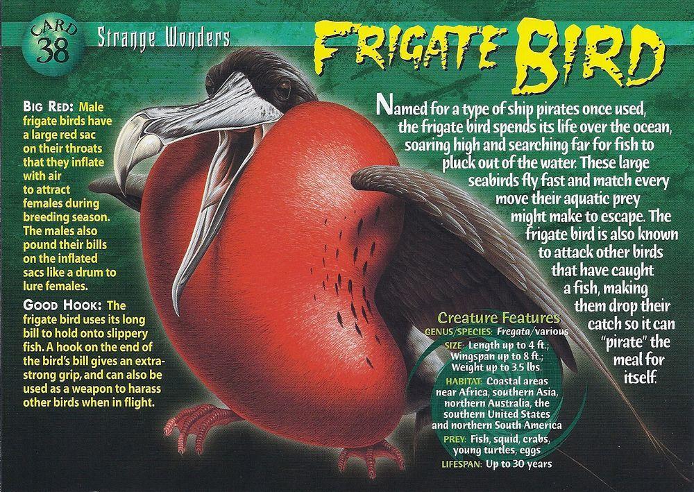 Frigate bird wierd nwild creatures wiki fandom