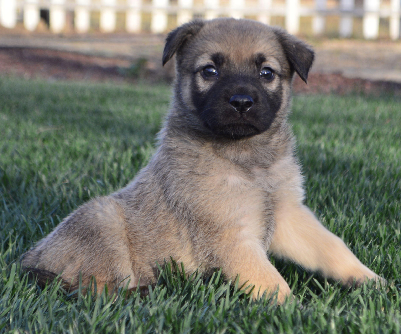 Shug Dog For Adoption In Palo Alto Ca Adn 468550 On Puppyfinder