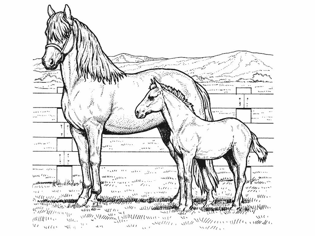 Horse And Pony Realistic Coloring Page Horse Coloring Pages Horse Coloring Animal Coloring Pages