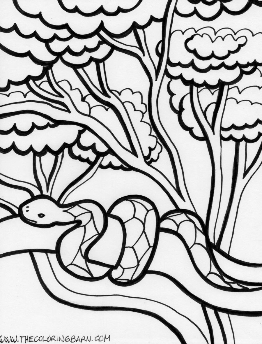 Rainforest Coloring Page Snake Coloring Pages Animal Coloring