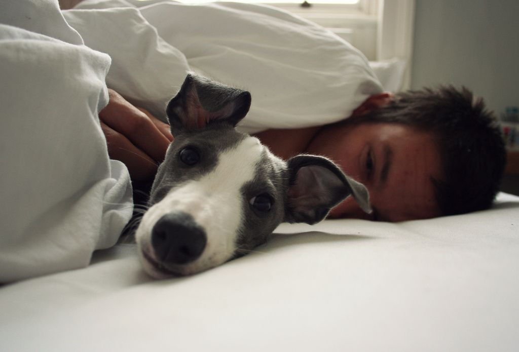 I Would Love Waking Up To Peter And My Doggie In The Future 3 Happiest Moment On Earth Pets Animals