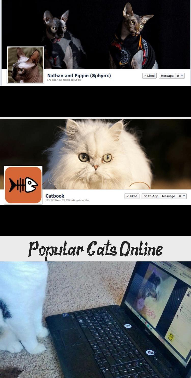 Photo of Gatos populares en línea – Divertido | A2 – Grumpy Cat se encuentra con Evil Sphynx … cuida tu vida …