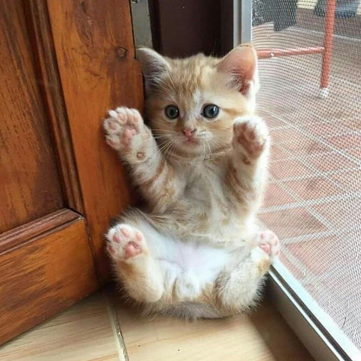Never Released 5 Things Your Cat Definitely Want You To Get Right Now Kittens Cutest Cute Baby Animals Baby Cats