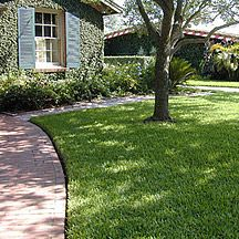 Palmetto Is A Semi Dwarf St Augustine Grass And Is Our Best Performer In Shady Conditions Front Lawn Landscaping Beautiful Backyards Lawn Care