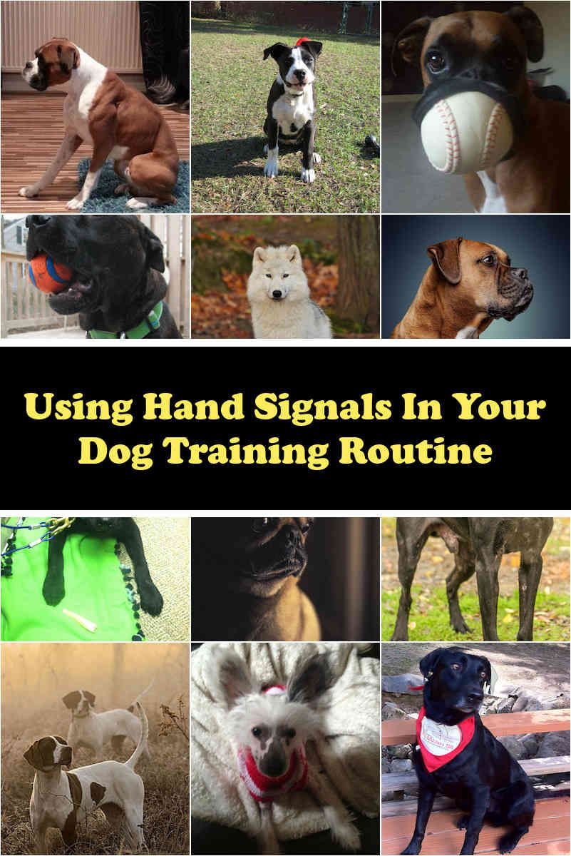 Dog Information How To Discipline Your Dog Dog Training Dogs
