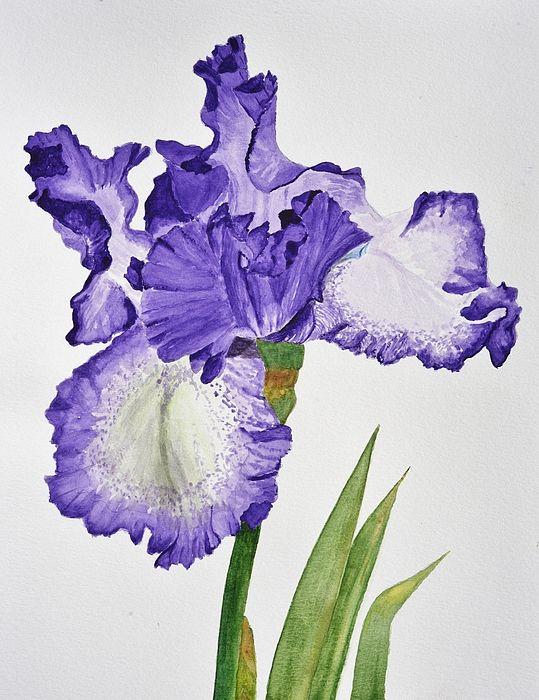 Violet Iris Flower With Leaves By Linda Brody Iris Painting Flower Painting Abstract Flower Art