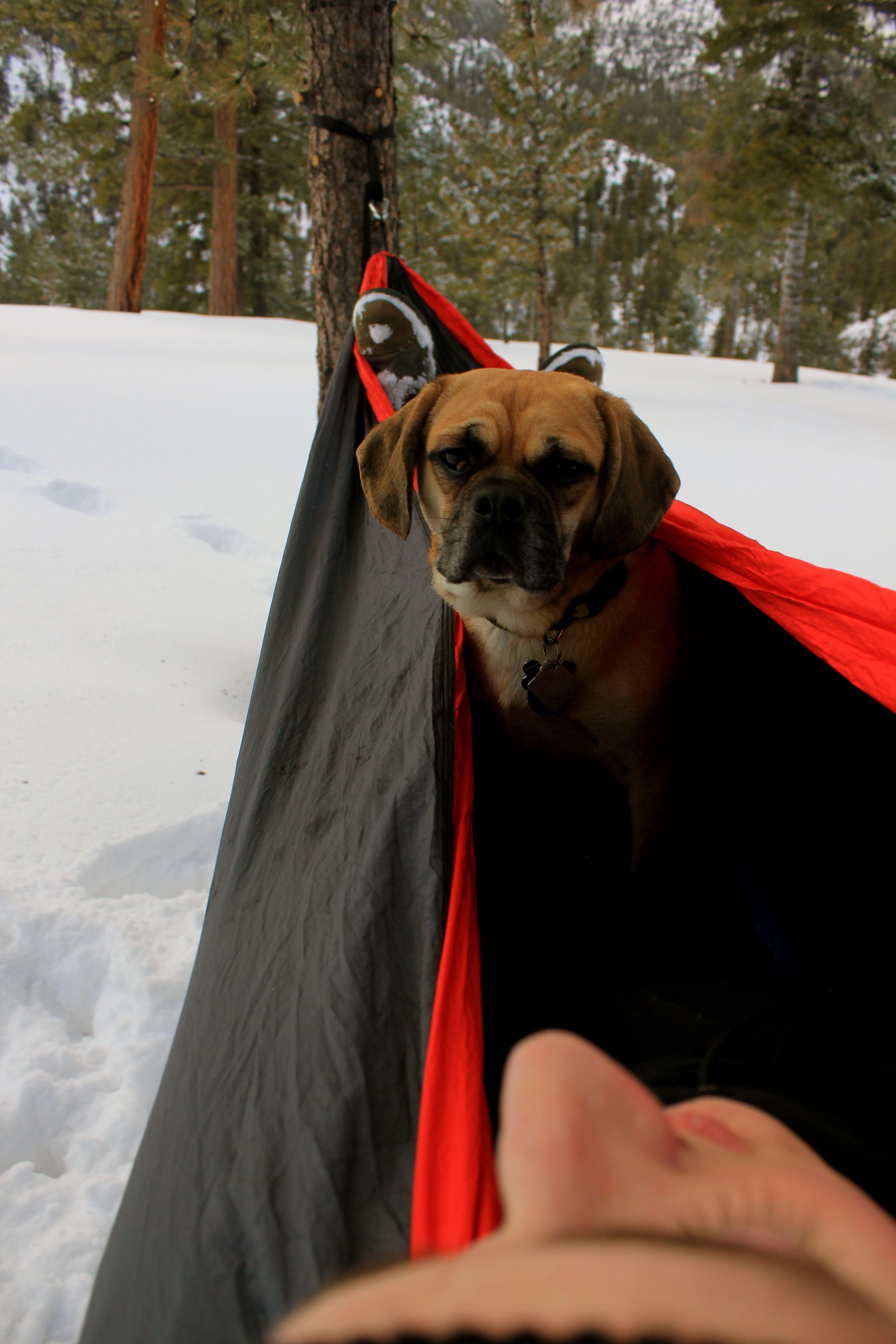 hammocks chocolate img car hammock products seat leather waxed protector canvas dog